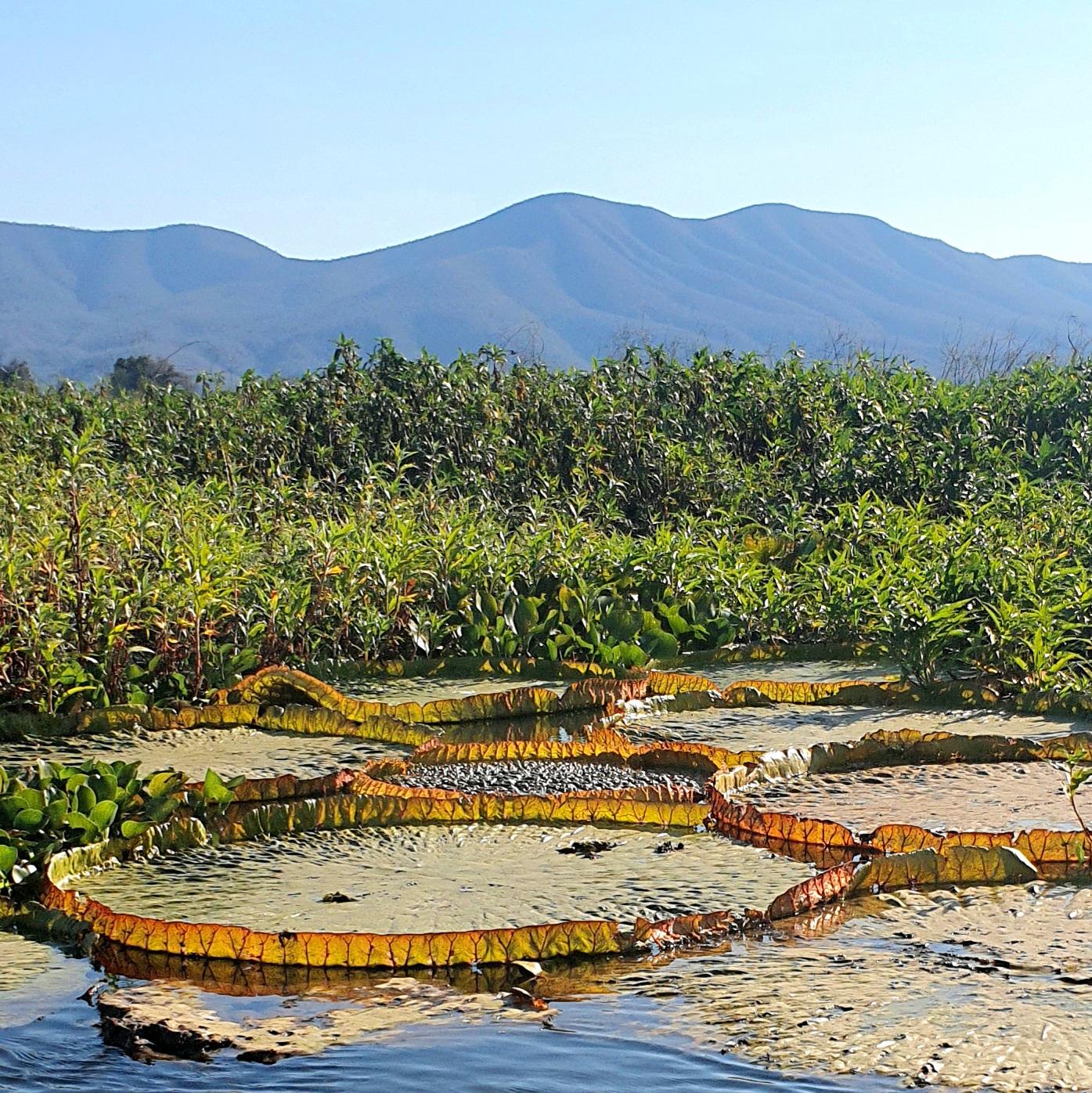 Serra do Amolar é destino para turismo de experiência no Pantanal do MS